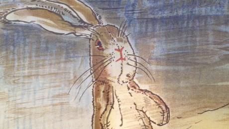 rabbit-460x260